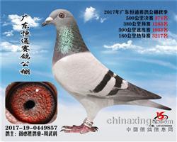 2017恒通公棚374位(只交费2羽)