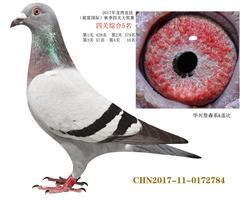 0172784(四关综合5名)