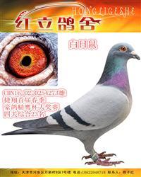 捷翔首届春季豪鸽精鹰杯大奖赛四关综合23