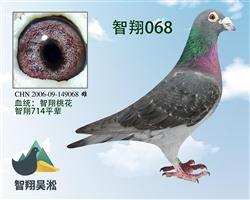 智翔桃花068