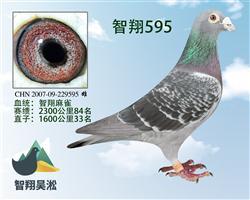智翔麻雀595