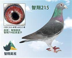 智翔桃花215