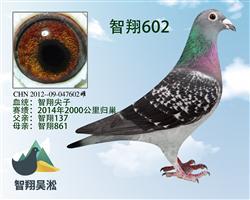 智翔尖子602
