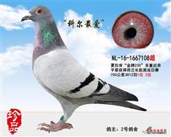 """""""科尔最爱""""(已出售)"""