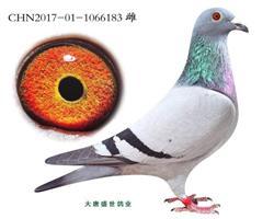 新福雷迪x闪电尼古拉斯(金棕榈直孙)