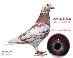幕利门火凤凰
