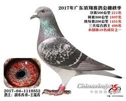 广东浓翔公棚决赛211名