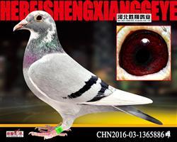 CHN2016-03-1365886雌