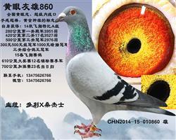 黄眼灰雄860