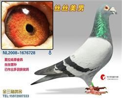 """""""丝丝美男""""(微信询价看视屏)"""