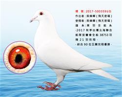 东羽白百合359