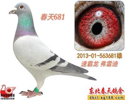 【春天】速霸龙681