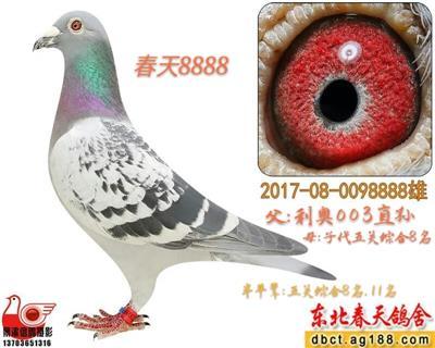 【春天】8888
