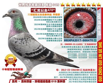 """11项冠军近亲直女""""汇龙公主470"""""""