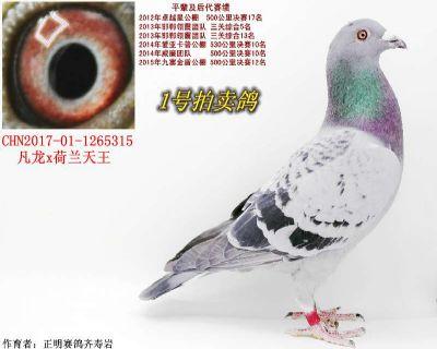 凡龙X汗血宝马-雄315