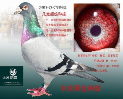 凡龙雄997