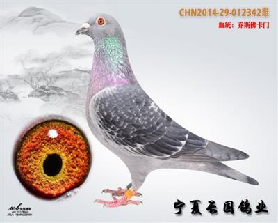 CHN2014-29-012342