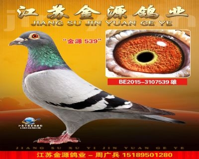 BE2015-3107539雄