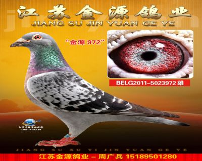 BELG2011-5023972雄