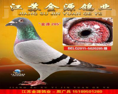 BELG2011-5020285雌