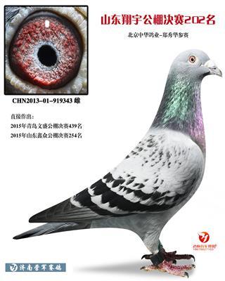 中华鸽业―郑秀华公棚202名