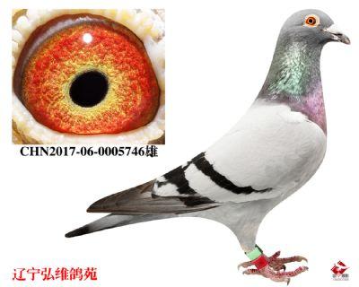 CHN2017-06-0005746雄