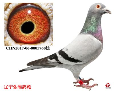 CHN2017-06-0005768雄