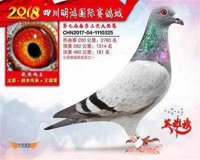 四川明鸿国际赛鸽城决赛181名