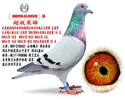 已转让北京一五关鸽王总冠军