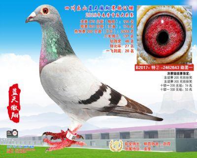 乐山蓝天傲翔比赛1