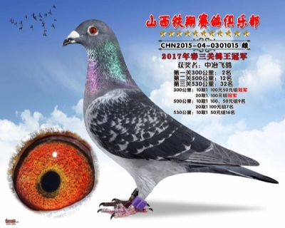 隆吉尔-胡本-铁翔俱乐部鸽王冠军