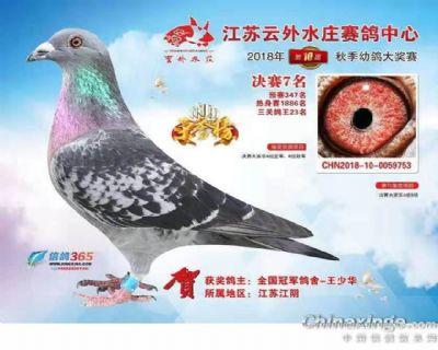 云外水庄赛鸽中心2018决赛7名