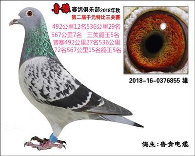 鲁豫赛鸽俱乐部三关鸽王5名