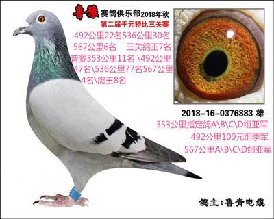 鲁豫赛鸽俱乐部三关鸽王7名