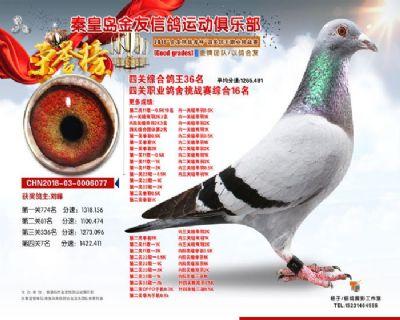秦皇岛金友赛鸽俱乐部