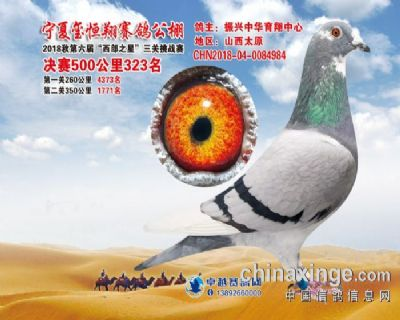 宁夏玺恒翔公棚决赛323名