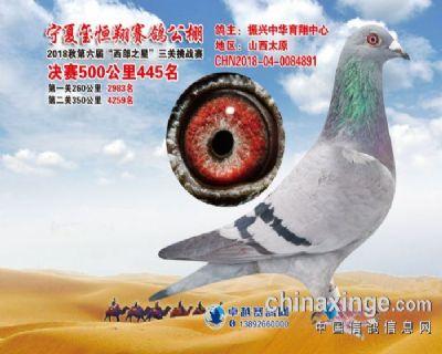 宁夏玺恒翔公棚决赛445名