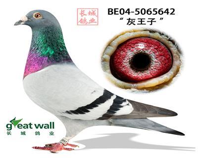 """【灰王子】世界超级种公""""福雷迪""""直子"""