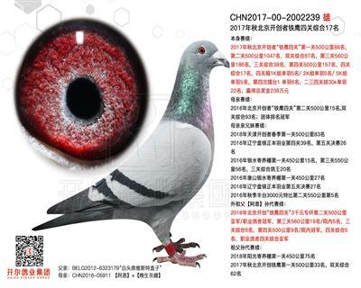 17年北京铁鹰开创四关综合17名