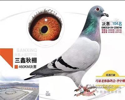 18年秋云南三鑫赛鸽公棚决赛104名!