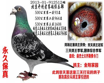 北京开创赛鸽俱乐部