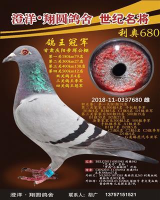 鸽王冠军680