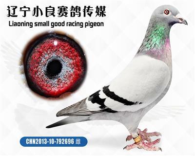"""""""中国天一鸽业""""电脑皇后"""