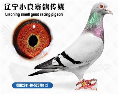 """""""中国天一鸽业""""鼎盛旋风"""