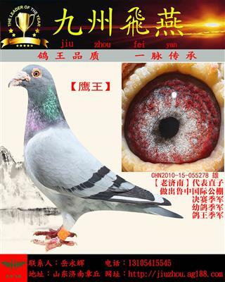 【鹰王】仅供欣赏