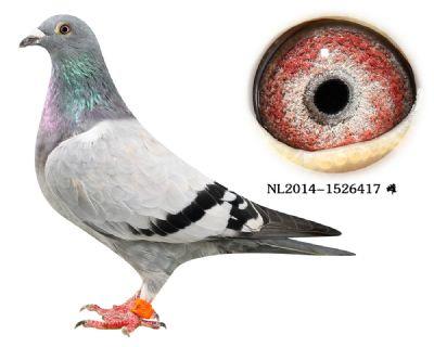 58-NL2014-1526417