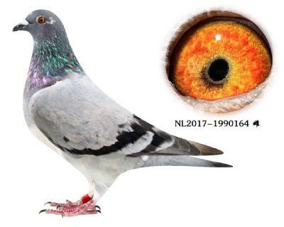 59-NL2017-1990164