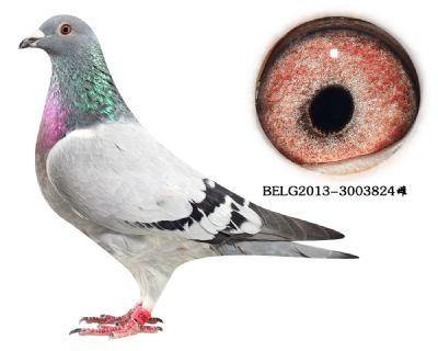 64-BELG2013-3003824