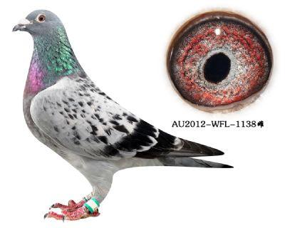 68-AU2012-WFL-1138