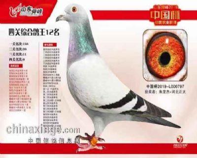 山东舜峰(中国杯)四关鸽王12名